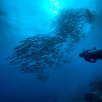 spectacular diving in Madang